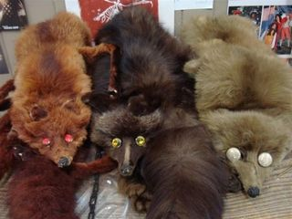 Enchanted_palace_creepy fox furs